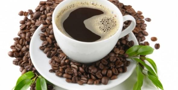 gu cà phê và dòng chảy lịch sử